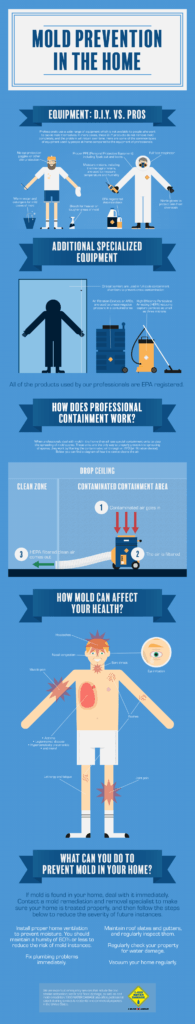 infographic-mold-diy-vs-pro-prevention