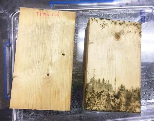 Lab Tests Confirm No Mold Growth with Endurance BioBarrier