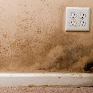 Mold Remover for Baseboards and Drywall