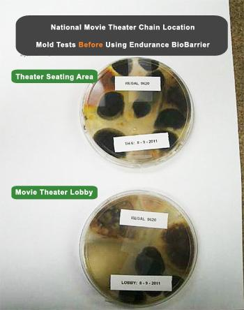How to get rid of mold problem and musty odors in a movie theater.